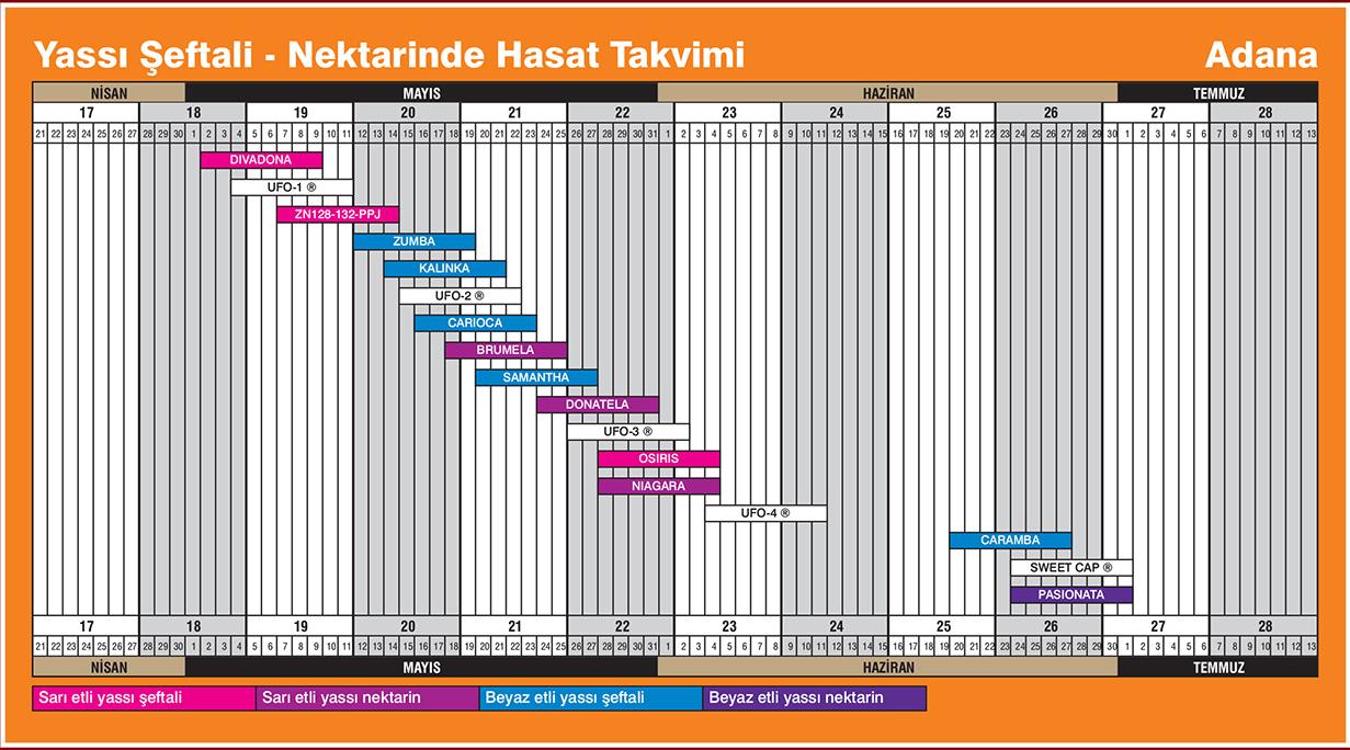 Yassı Şeftali Adana Hasat Takvimi